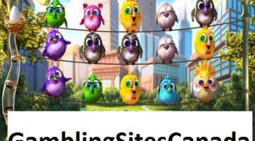 Birds Slots Game